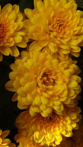 """БРАНХАЛО,5/35СМ, АВГУСТ""""вэтом году уже с июля первые цветы распустились"""